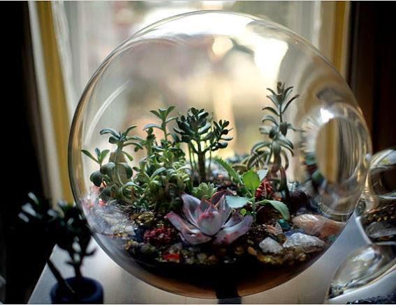 Official Disclosure Protocol: TERRARIUM ARhAyas Ascension Earth 79503-tiny-garden