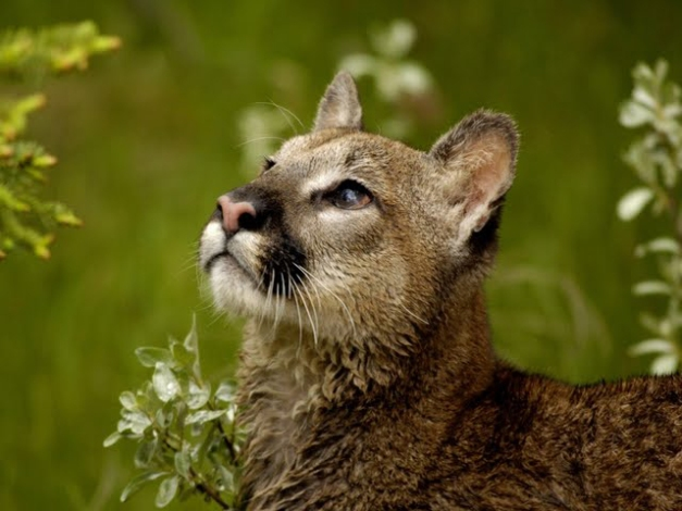 looking-upcat2