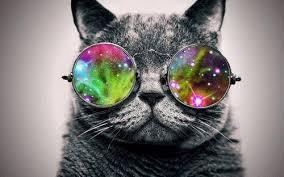 catfunk
