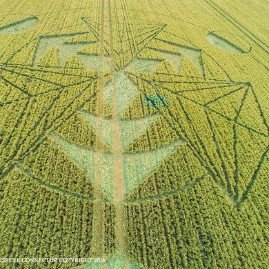 crop1