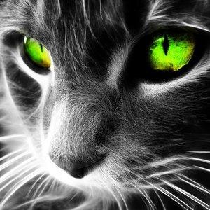greeneye