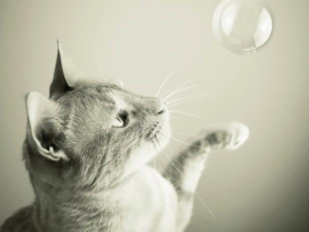 catbubble