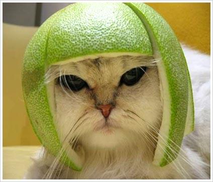 cathatfruit