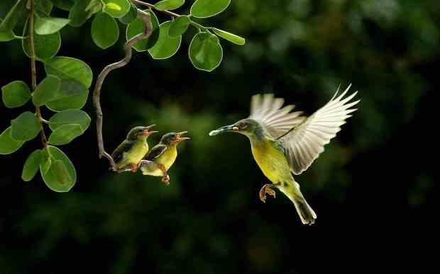 hummingbird-and-child