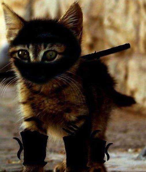 kitty_ninja