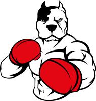 pitbull-boxing
