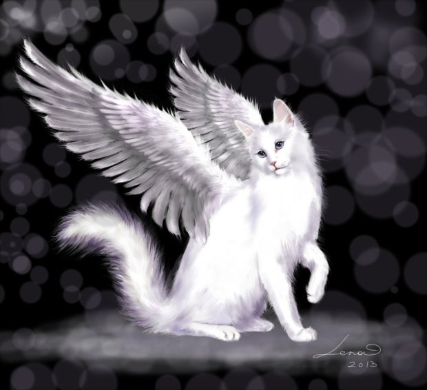 angel_cat