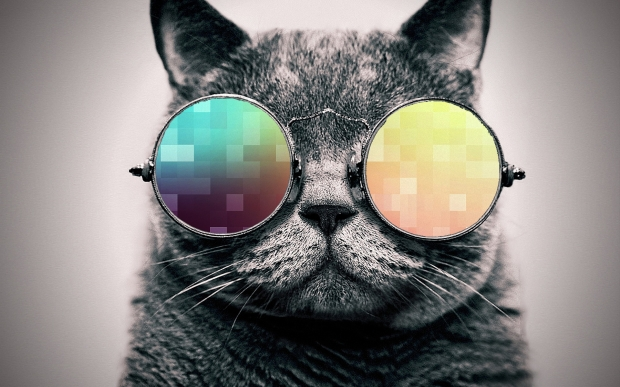 cool_cat__pixel