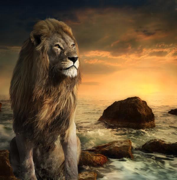 lionwave