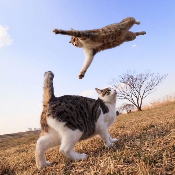 ninja-cats-18