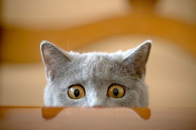 surprised-cat