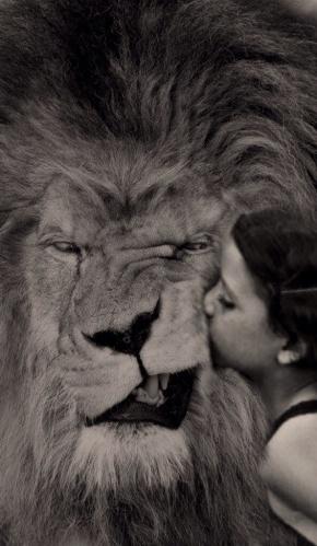 lionboy-pg