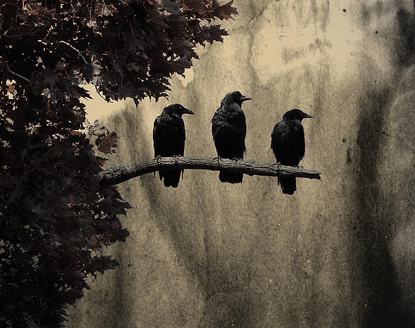 three-ravens
