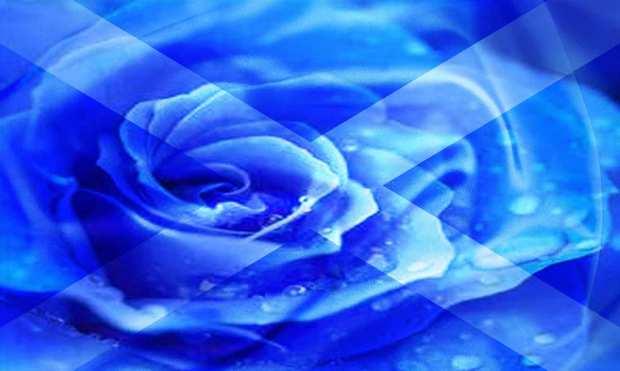 blueflagg