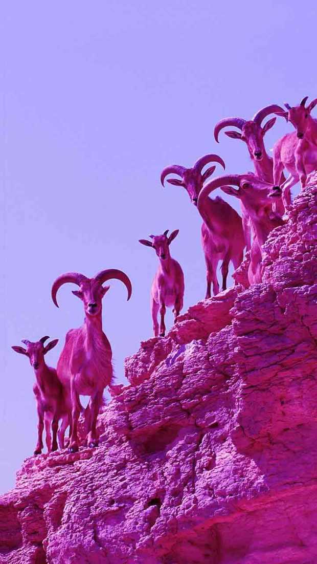 goatss