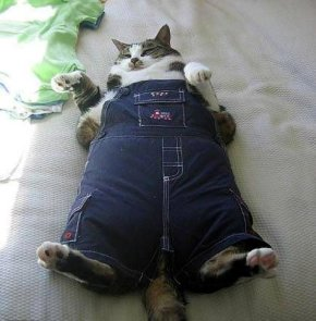 fat-cat-in-pants