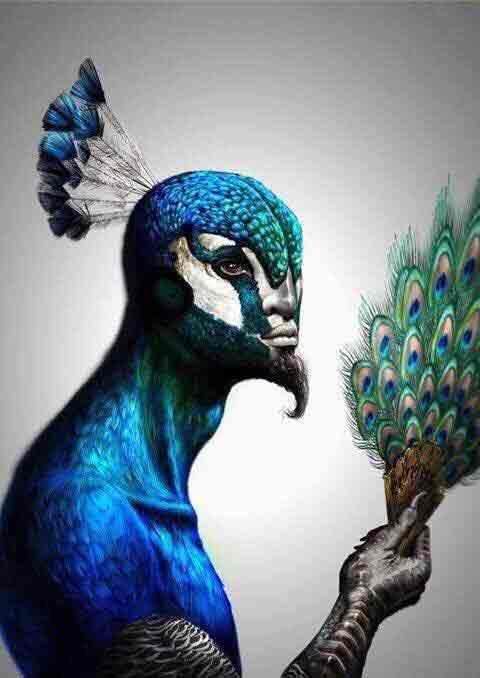 peacockangellx