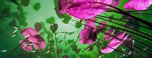 lilliesfish
