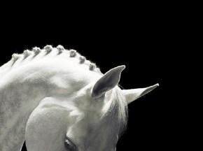 horsebraiddd