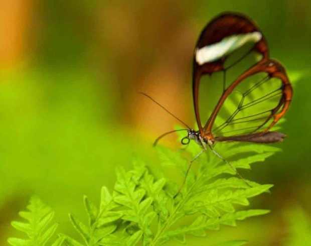 butterflyxxx