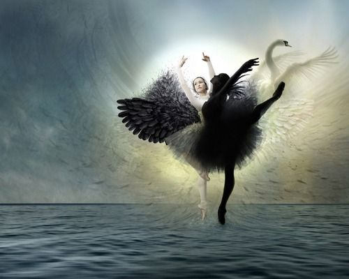 swanblack