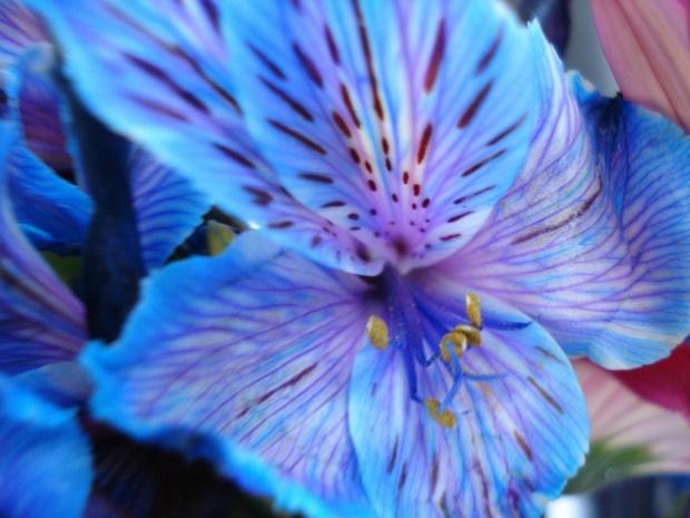 blue-flower-3