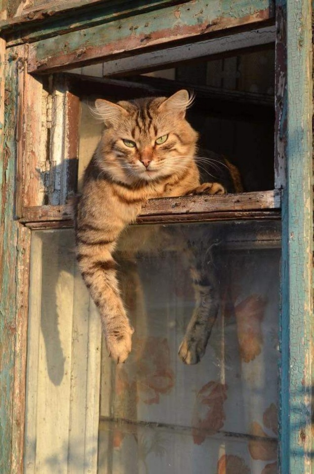 catfree
