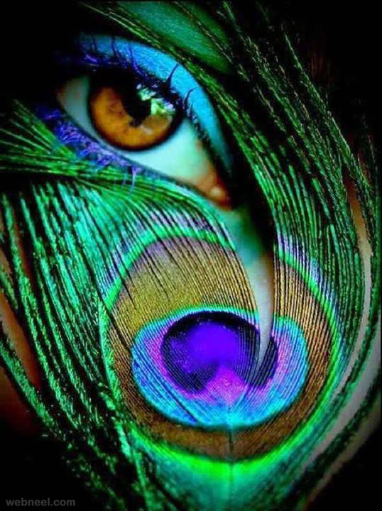 creative-photography-eye-peacock