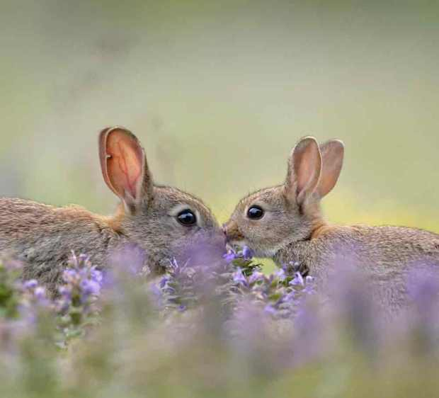 rabbitkiss