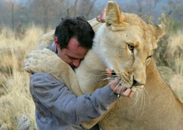 black-and-white-lion-desktop-kevin-richardson-the-man-78271