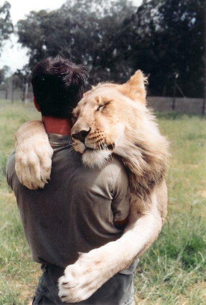 lion-human-friend-friends-photography-love-friendship-hug-nature-beautiful-cute-favim-com-461058