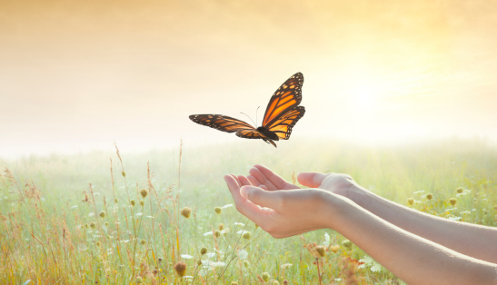 butterfly-and-hands