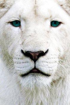 lionblue