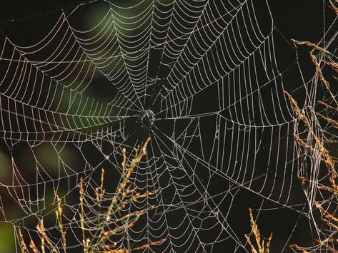 george-grall-an-orb-weaving-spiders-web-among-weeds