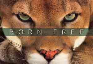 bornfree