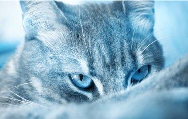 ice_cat_by_wolfdarkkitty-d5lwm9d