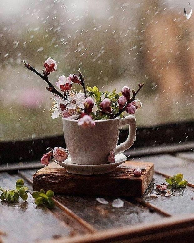 flowercupblossom