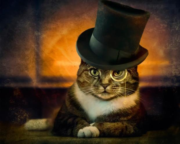 the-detective-cat-with-hat-boss-look-funny-image