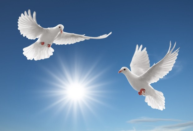 nice-pigeon-wallpapers