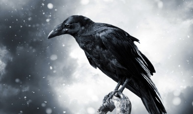 crow_snow_bird_animal_hd-wallpaper-1869990