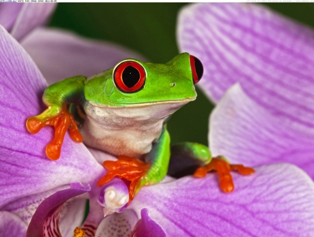frogs_wallpapers_386
