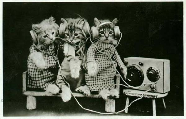 1976_cats-cute-headphones_600-385