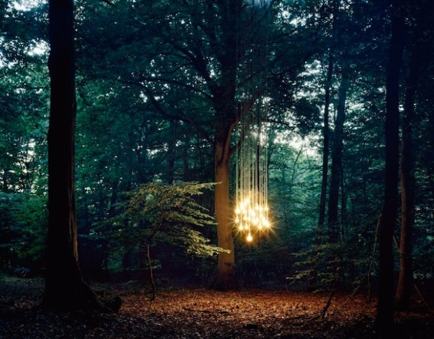 lights-in-the-wood-3