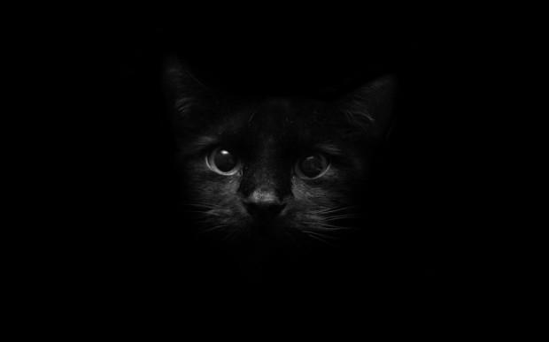 black-cat-wallpaper-3