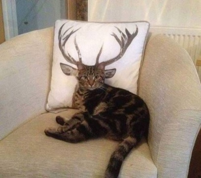 catantler