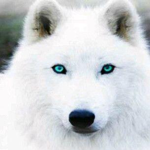606161314830553817c0564177df7ce0-green-eyes-yellow-eyes