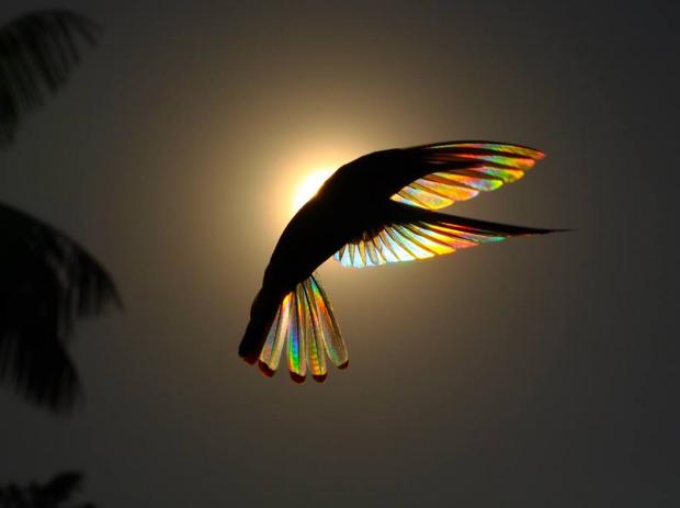 BOWBIRD