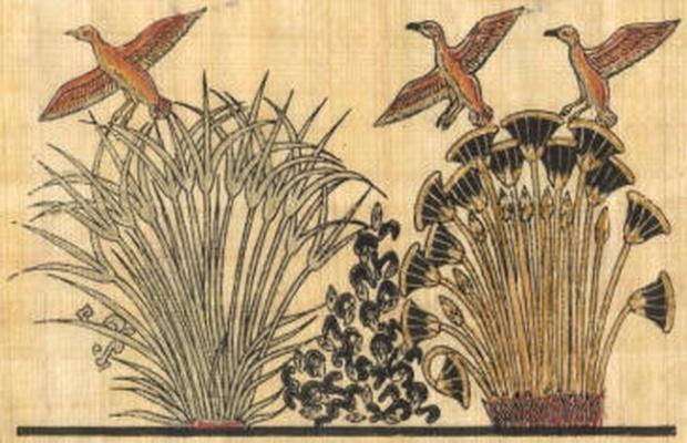 ducks-in-papyrus-marsh