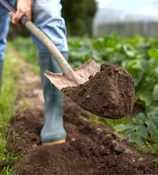 dirt-cheap-kitchener-cambridge-hamilton-guelph-gardening-mistakes-n7qoq0nmuj4sz8gr2slvstyrem5uy9tdzw8ffz7elo-n7rdbq0uojlgvlxh6n8eabsyb8mxyw033q5cw9ynjg