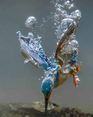 kingfishercatch